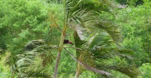 沖縄の木造住宅は台風に耐えられる?強い家づくりと注意点